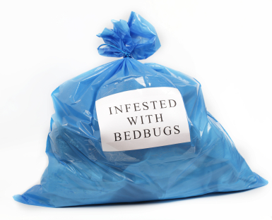 Clothes With Bedbugs In Bag How To Get Rid Of Bed Bugs